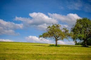 Landschaftsbild mit zwei Apfelbäumen, © Enzo Lopardo